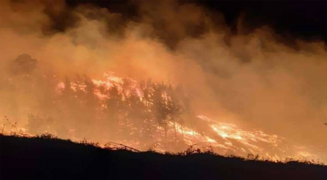 اندلاع حريق في غابات أضنة.. وفرق الإطفاء تتمكن من إخماده