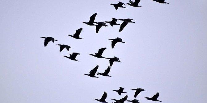 """إسطنبول.. تحذيرات من ملامسة الطيور النافقة خوفاً من """"غرب النيل"""""""