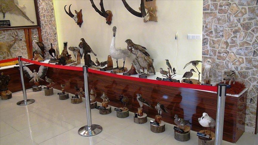 """مركز للتحنيط في تركيا.. """"متحف"""" الحياة البرية"""