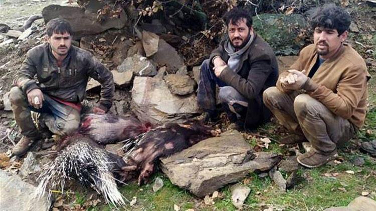 لاصطيادهم قنافذ محمية بولاية مانيسا..تغريم 3 سوريين 40 ألف ليرة