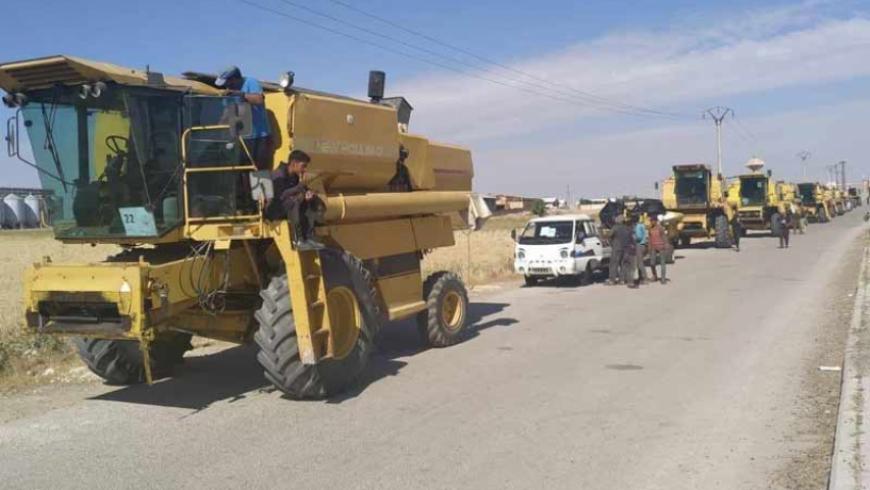 """تركيا تبدأ شراء الحبوب من المزارعين السوريين في """"رأس العين"""""""