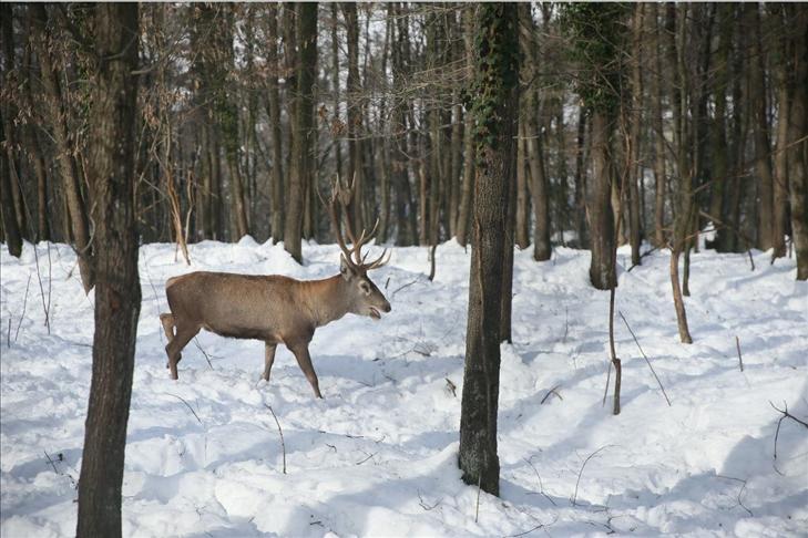 """تركيا.. الثلوج تتيح رؤية الحيوانات البرية في محمية """"أورمانيا"""""""