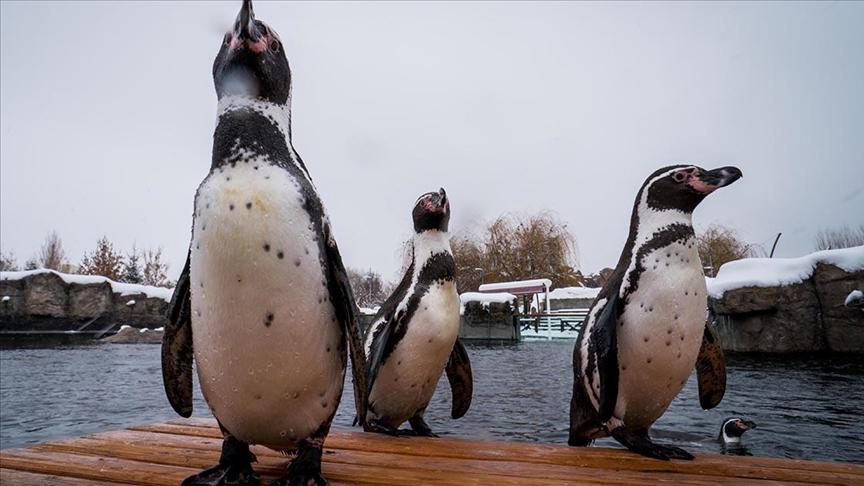 """نزلاء حديقة حيوانات """"أسكي شهير"""" يستمتعون بالثلوج"""