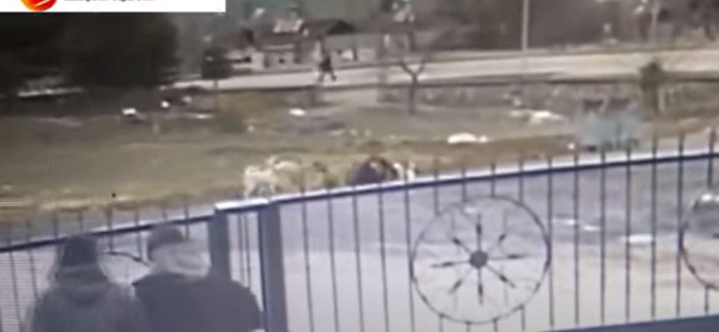 18 قطبة في جسدها.. امرأة هاجمتها 8 كلاب شاردة تنجو بأعجوبة في ملاطيا (فيديو)