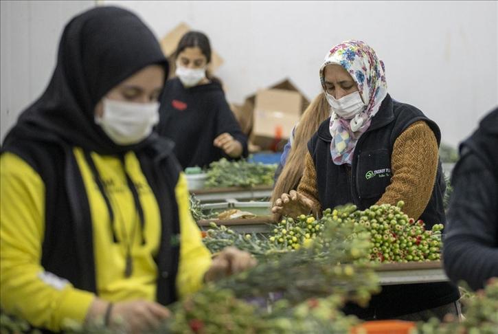 صادرات تركيا من الأزهار تنمو 19 بالمئة