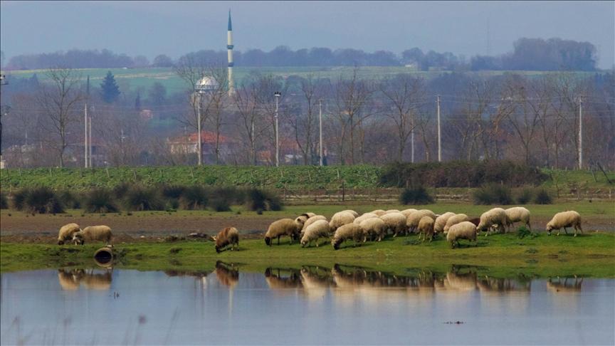 """بحلول الربيع.. زيادة الإقبال على """"جنّة الطيور"""" شمالي تركيا"""