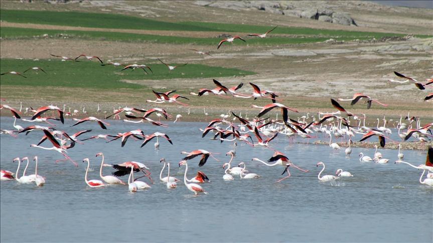 """بحيرة """"الملح"""" التركية.. إحدى أكبر مستعمرات """"الفلامينغو"""" بالعالم"""