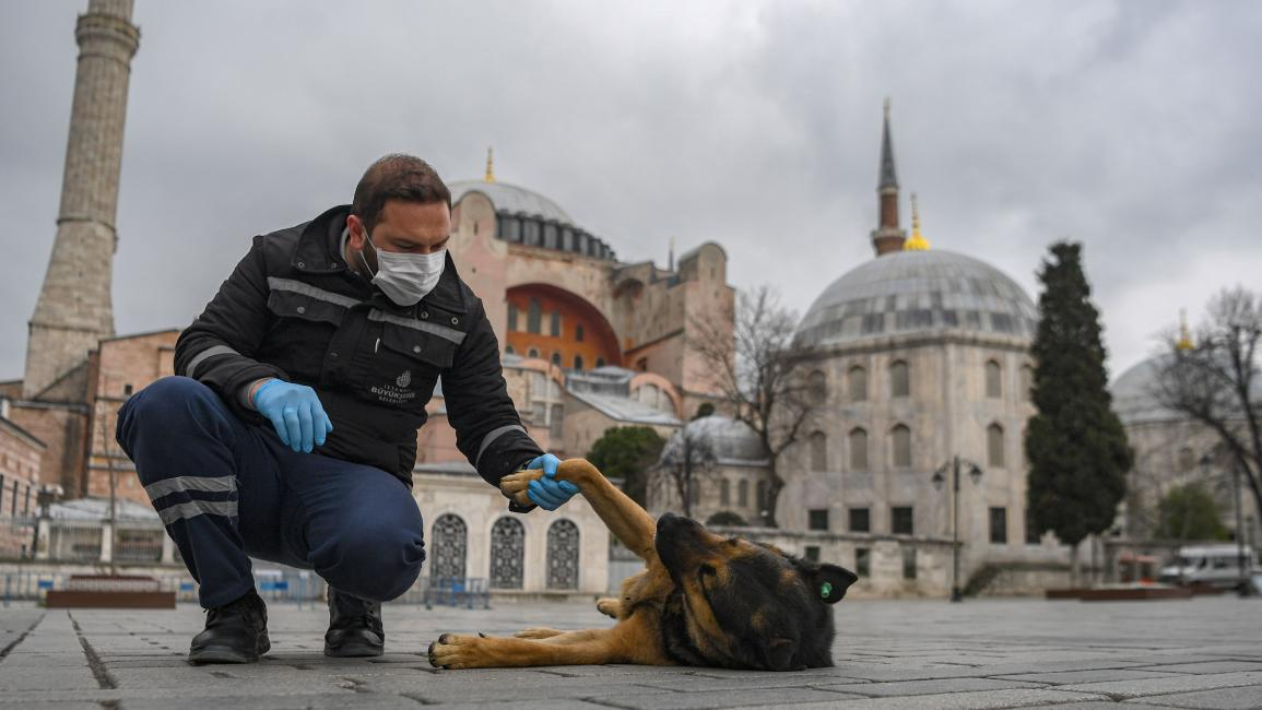 سريان قانون حماية الحيوان في تركيا بعد سنوات من التأجيل