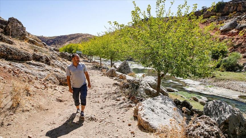 خلال 23 عاماً.. مواطن تركي يزرع 10 آلاف شجرة بمحيط قريته في دياربكر