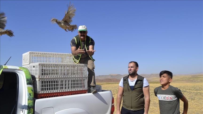 إطلاق 1250 طائر حجل في باطمان لتعزيز الحياة البرية